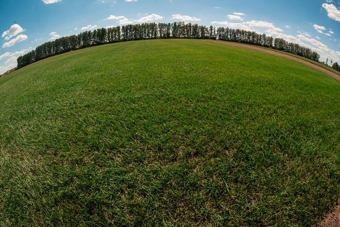 купить газонная трава в оренбурге